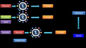 Figura 1b